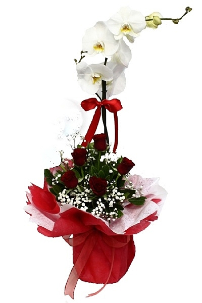 orkide ile güllerin buluşması